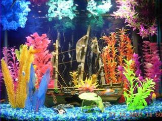 Fish tank colorful